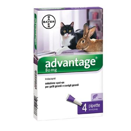 Bayer Advantage 80mg Fialette per Gatti Oltre i 4Kg