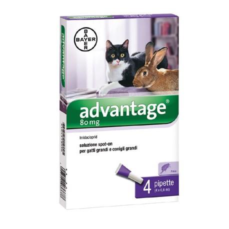 Bayer Advantage Fialette per Gatti Oltre i 4Kg